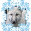 WolvesAngelSiren's avatar