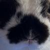 wolvesrlove123's avatar