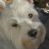 WyethCatJunior's avatar