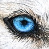 Wylderness's avatar