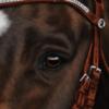 xAk41x's avatar