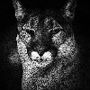 xclt's avatar