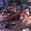 Xelniatheleopard's avatar