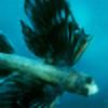 xfishwings's avatar