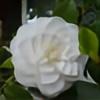 xomusiclover93ox's avatar