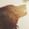 xpeng's avatar