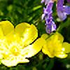 xPicturez's avatar