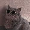 xReiDesigns's avatar