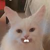 xristosmon's avatar