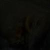 xXmooimmapandaXx's avatar