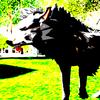 XxRadioactivewolfxX's avatar