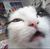 xxslasher22's avatar