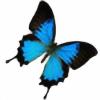 xybutterfly's avatar