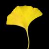 xyloxenic's avatar