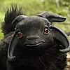 xynx's avatar