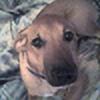 Yachiru-Uzephi's avatar