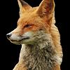 yaelxdeviantart's avatar
