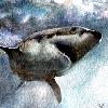 yag65's avatar