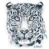 Yala25's avatar