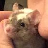 yamioreomouse's avatar