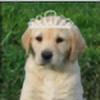YellowLab8078's avatar