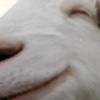 Yharrton's avatar
