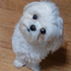 yhe306's avatar