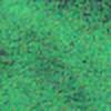 yottewani's avatar