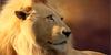 YoungLion42's avatar