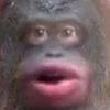 Yu-Xin's avatar