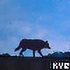 Yukira's avatar