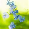 yunhe0305's avatar