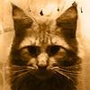 Yuran1's avatar