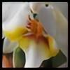 yvilmonster's avatar