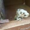 ZamberZT's avatar