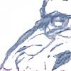 ZeeFinch's avatar