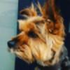 zenithilia's avatar