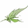zenque's avatar