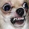 Zeucifer's avatar