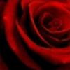 zigra's avatar