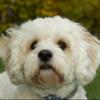 zimp33's avatar