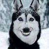 Zm1L3's avatar