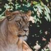 zo509's avatar