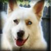 ZOMBIE-ROCKSTAR's avatar