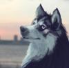 zoodele's avatar