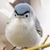 ZorroHills's avatar