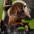 :icon00tao-horses00: