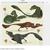 :icon123forallbirds: