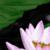 :icon1313dw: