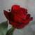 :icon8d-gcarb: